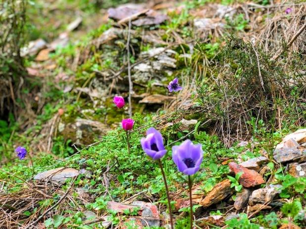 çiçek.jpg